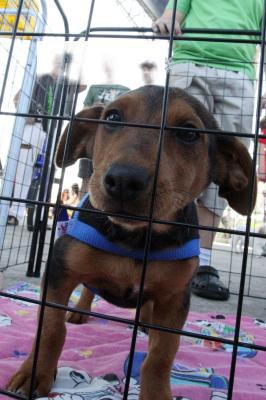 49 animais ganham novo lar pela Adotanimal