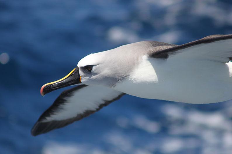 5 formas de contribuir para a conservação marinha sem sair de casa