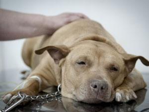 Único hospital público para cães e gatos do Brasil será ampliado