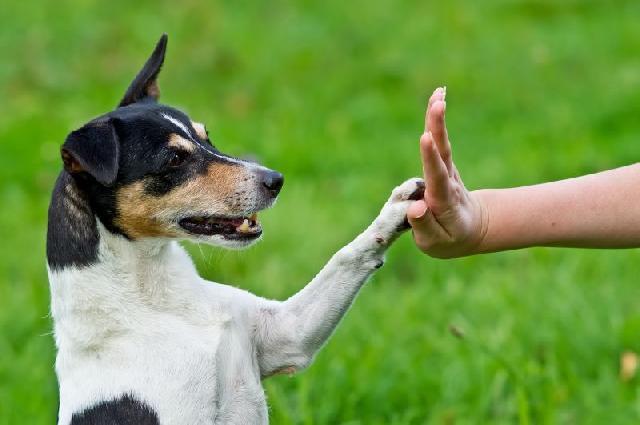 Benefícios do adestramento em cães