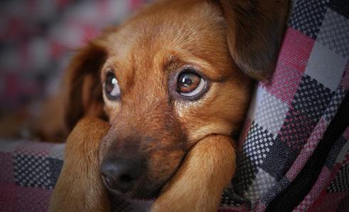 Adoção de animais domésticos cresce em meio ao isolamento social