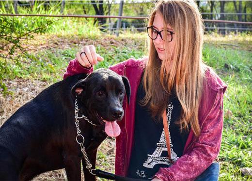 Afilhado de 4 Patas: proposta aproxima acadêmicos e cães