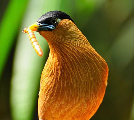 Cuidados com a alimentação dos pássaros
