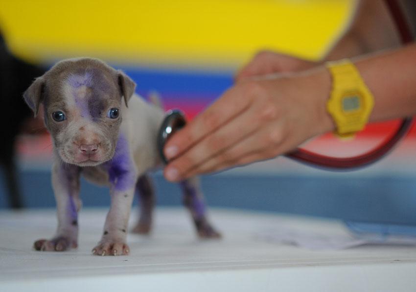 Animais de pequeno porte são maioria em atendimento nas clínicas veterinárias