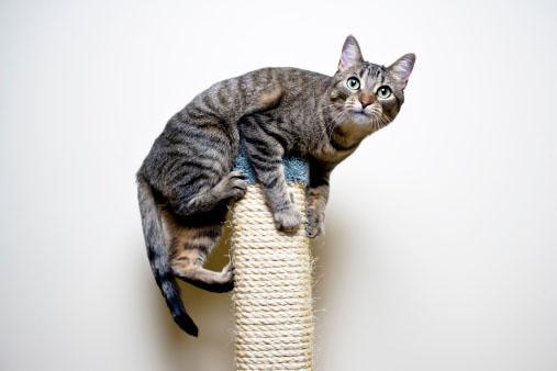 Arranhadores para gatos: descubra a importância deste brinquedo