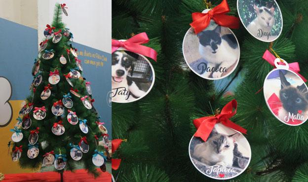 Dica de presente de Natal: adote um pet