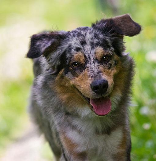 Cães adultos devem ser vermifugados a cada três meses