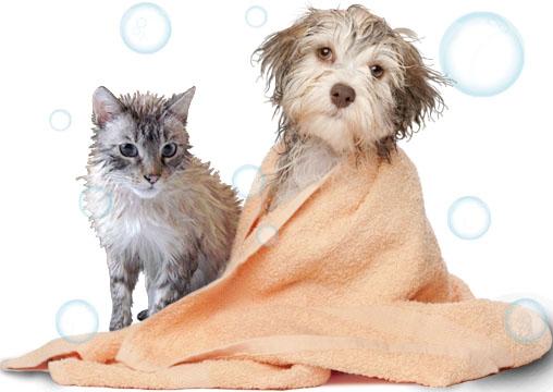 Hora do banho dos pets