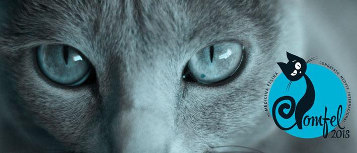 Medicina felina é destaque em evento realizado em Campinas