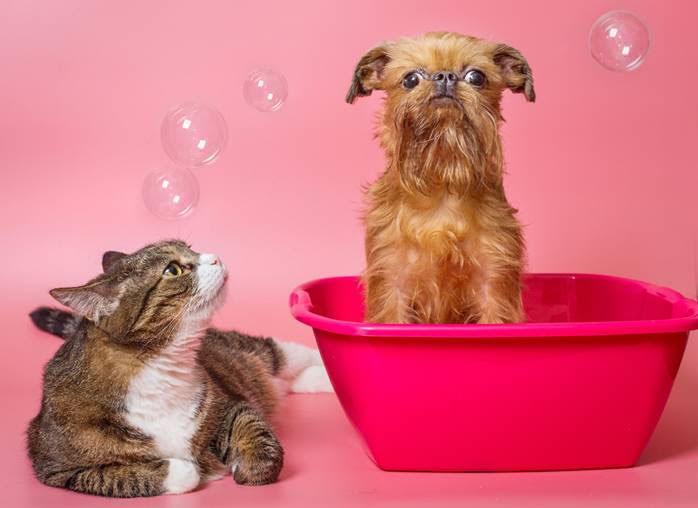 BASF lança plataforma online exclusiva para a indústria pet