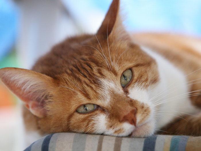 Bigodes nos gatos: um aliado nas travessuras