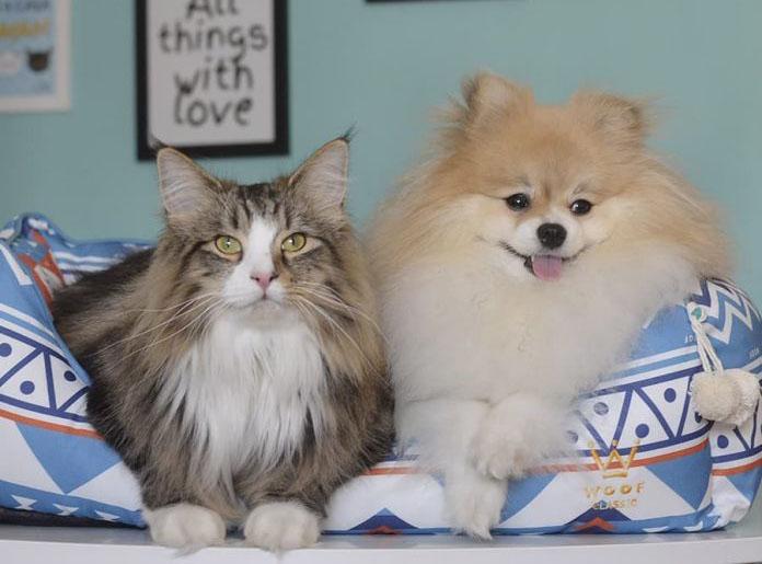 Cobasi e Premier organizam encontro de pet influencer