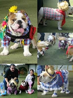 Bulldogada no Clube Pet Memorial tem Concurso de Cão Caipira e Casamento Canino