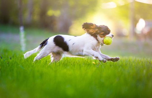 O verão chegou e é preciso seguir alguns cuidados com seu pet