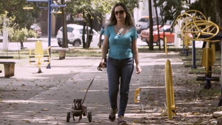 """Cachorra cadeirante é destaque na série online """"Amor de Bicho"""""""