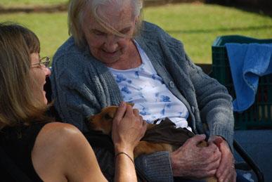 Cães adestrados: mais que uma companhia, uma terapia