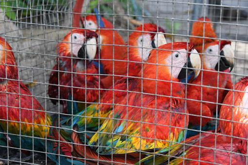 Proteção Animal expõe os problemas de animais silvestres mantidos como pets