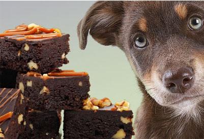 Dieta especial garante bem-estar para cão diabético