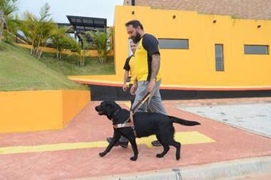 Cão-guia x pessoas com deficiência visual: o déficit alarmante no Brasil