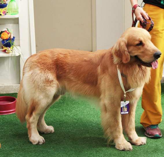 Hospital Placi adota projeto de terapia com animais