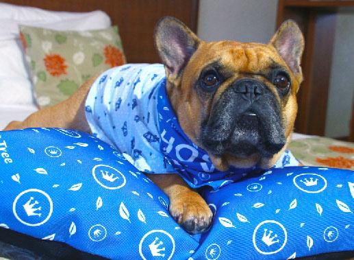 Blue Tree Towers Caxias do Sul oferece serviços dog friendly