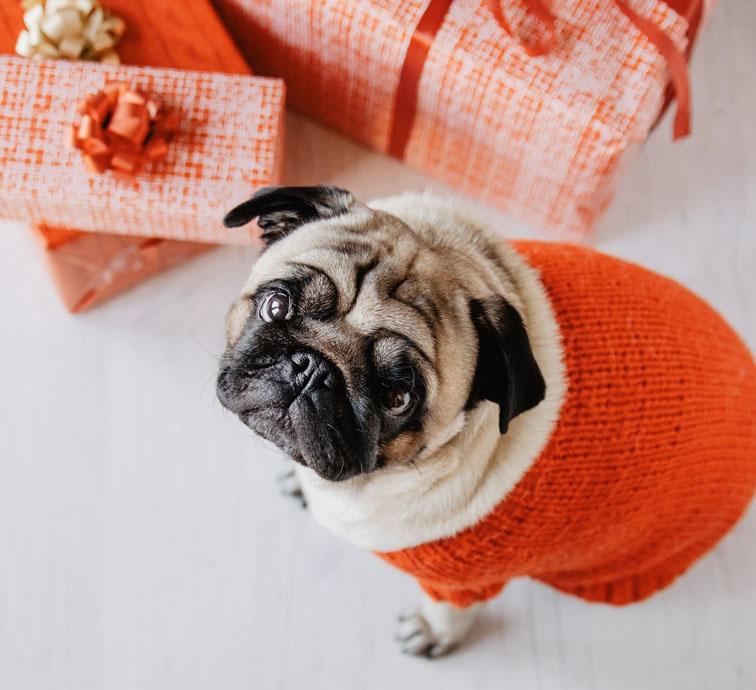 Presentear com um Pet no Natal, é uma boa escolha?