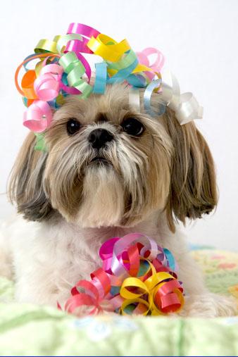 É possível curtir o carnaval com meu pet?