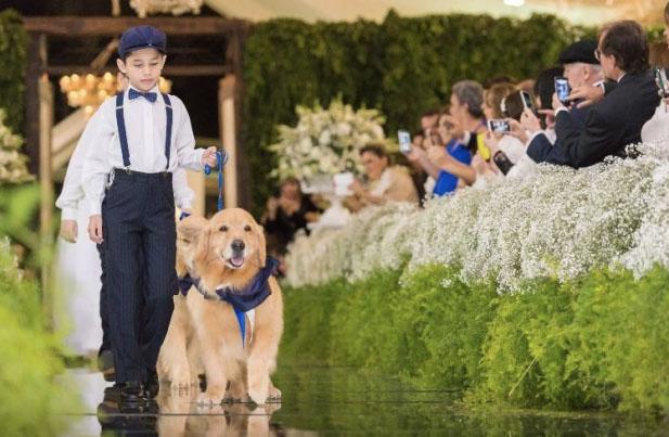 Casamento: Pets esbanjam fofura na cerimônia