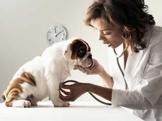 Check-up é o maior trunfo para donos que desejam curar câncer de cães e gatos