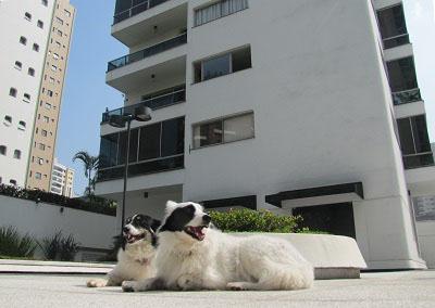 Cinco dicas para a boa convivência entre condôminos e animais de estimação