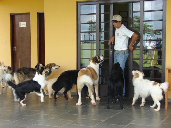 Clube de Cãompo: os cães também merecem tirar férias!
