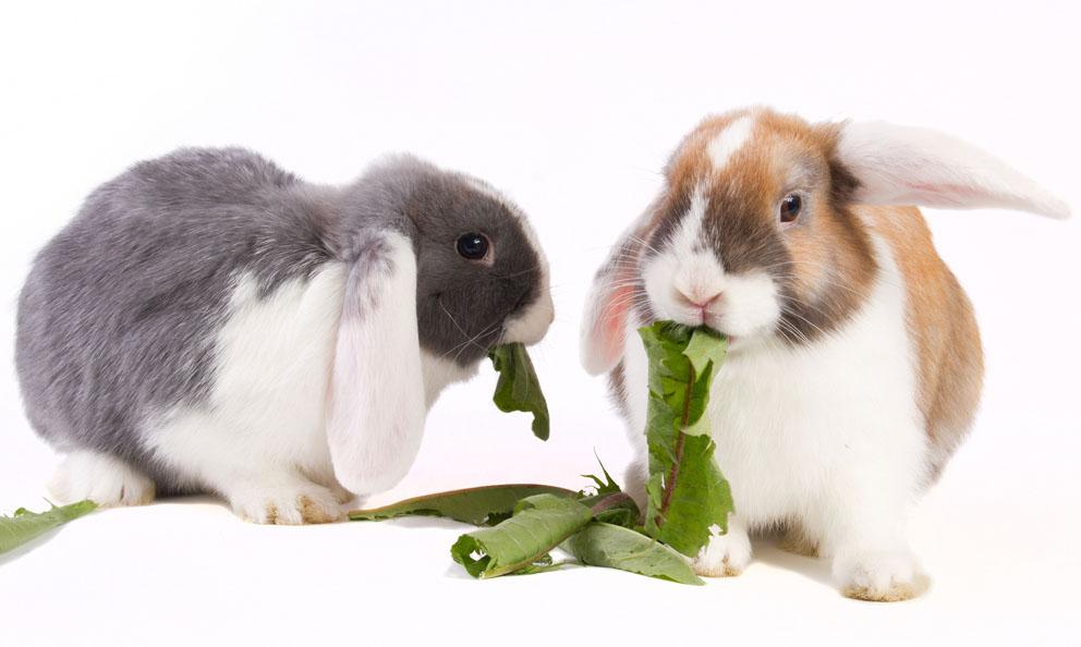 Com olhos redondos e pelos fofinhos, quem não se encanta com um coelhinho?