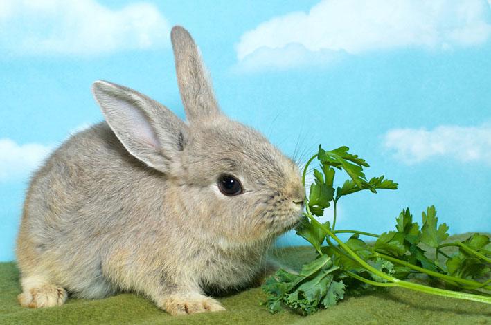 E o coelhinho de Páscoa que trazes pra mim?