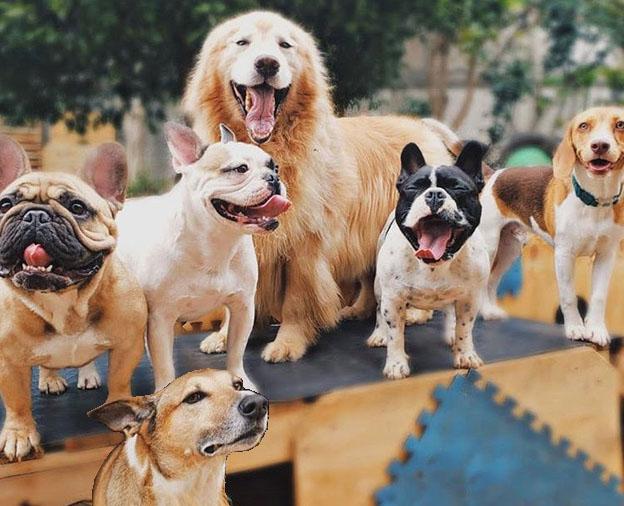 Com reabertura do comércio procura por Creches para Pets aumenta