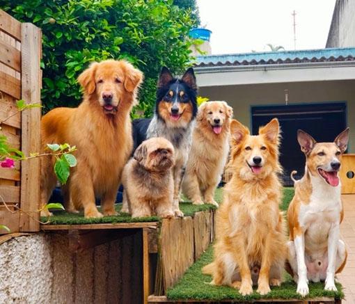 Creche Pet Family lança pacote para cães enquanto tutores ficam em quarentena