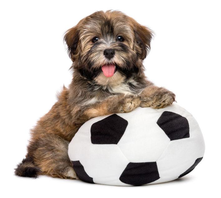 Copa do Mundo: Como melhorar o conforto do cão que tem medo de fogos?