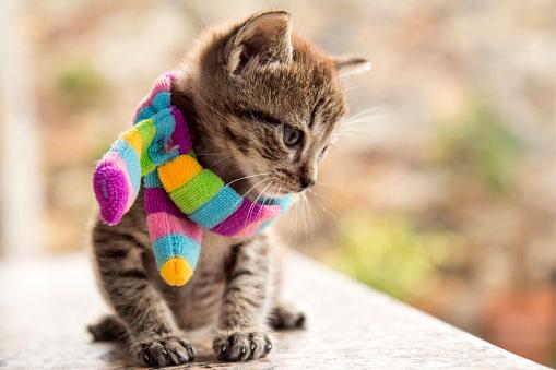 Cuidados com os gatos no inverno