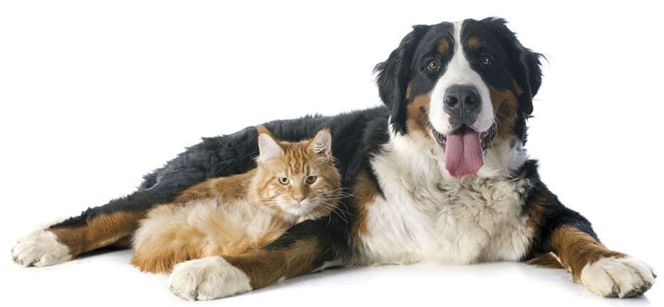 Alerta: cães e gatos precisam de cuidados especiais no inverno