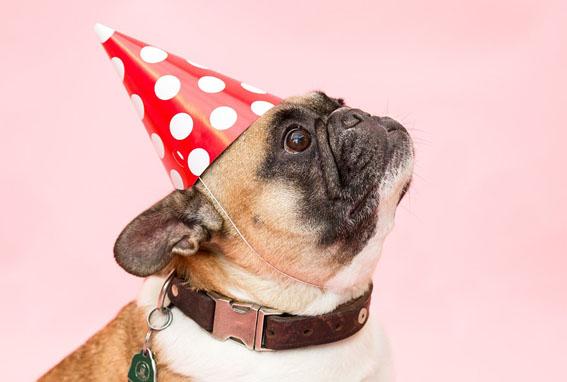 Está curtindo a folia nesse Carnaval? Já sabe quais os cuidados necessários com os pets?