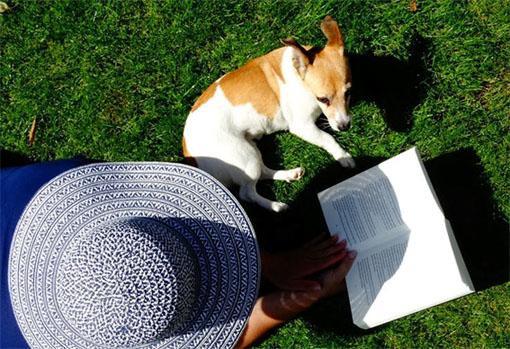 Atente para os cuidados no verão com seu animal de estimação