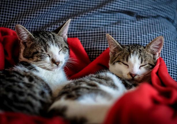 Cães e gatos exigem cuidados especiais durante as estações mais frias