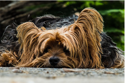 Diagnóstico precoce é fundamental para prevenir ou tratar câncer em cães e gatos