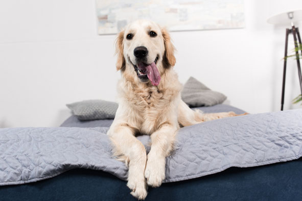 5 dicas de adoção de animais