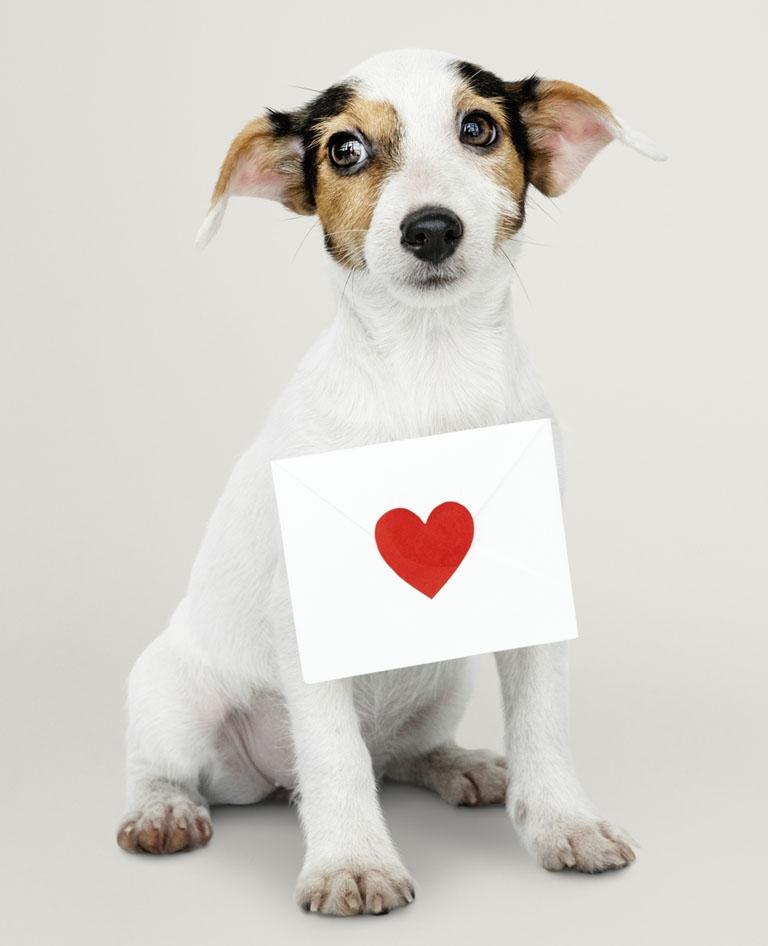 Como identificar um cão cardiopata?