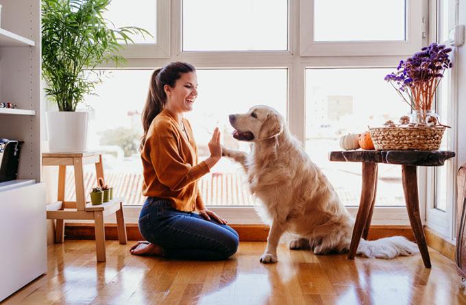 Covid-19: Como manter a rotina do meu cão durante o isolamento?