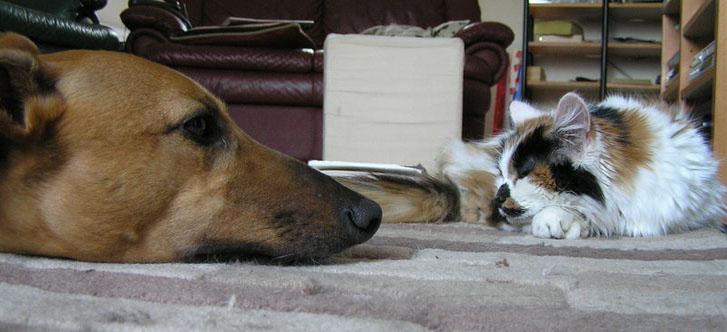 Você conhece a verdadeira diferença entre cães e gatos?