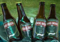 Encontro canino em Sorocaba terá casamento pet e brinde com cerveja específica para cães