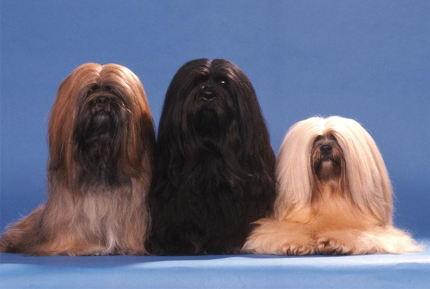 Pet center promove diversas atrações para os apaixonados por cães