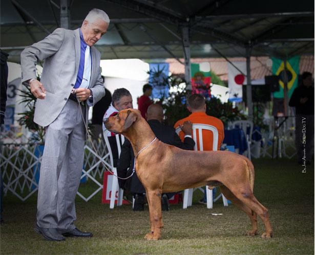 Atibaia recebe principal exposição de cães do país