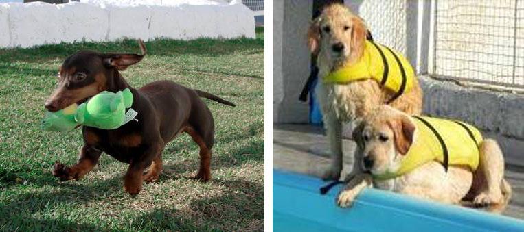 Férias de julho: hotel exclusivo para cães é opção para famílias que irão viajar